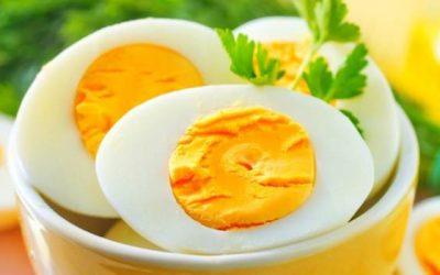 O ovo e seus inúmeros benefícios